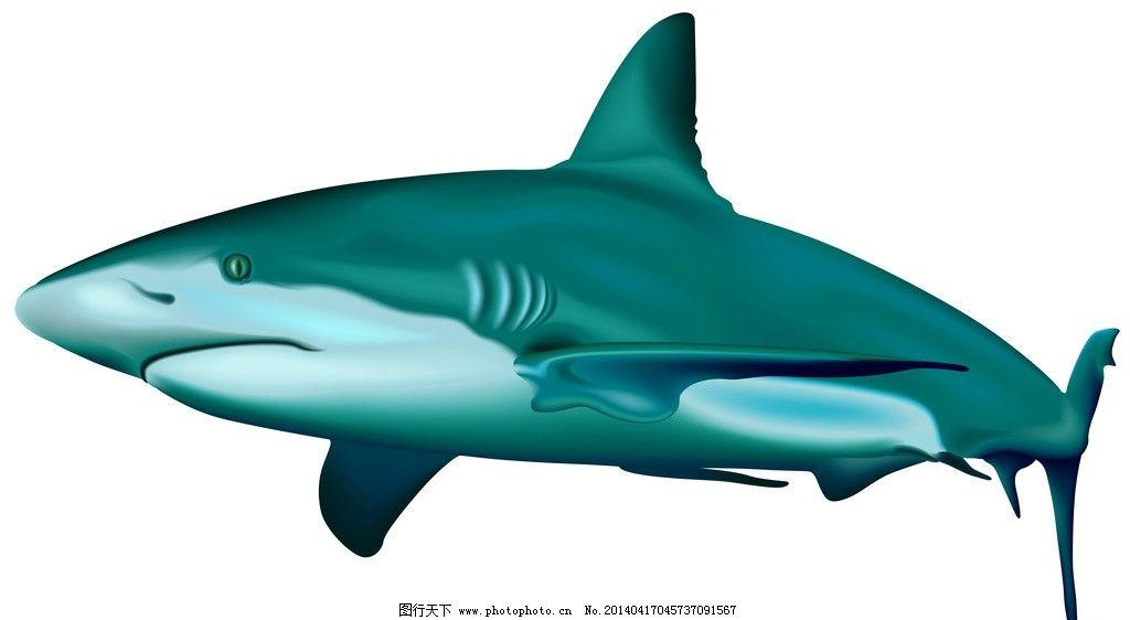 鲨鱼 野生 动物 海洋生物 卡通鲨鱼 手绘 矢量 鱼类 鱼 野生动物 生物