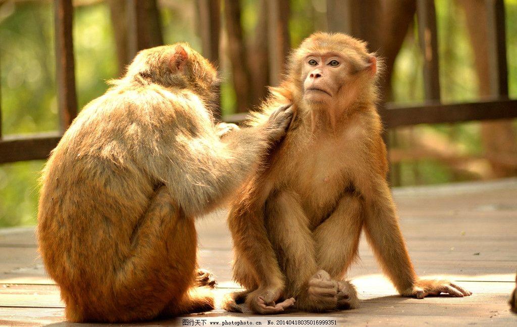 设计图库 生物世界 野生动物  哥两好 云南 普洱 犀牛坪 国家森林公园