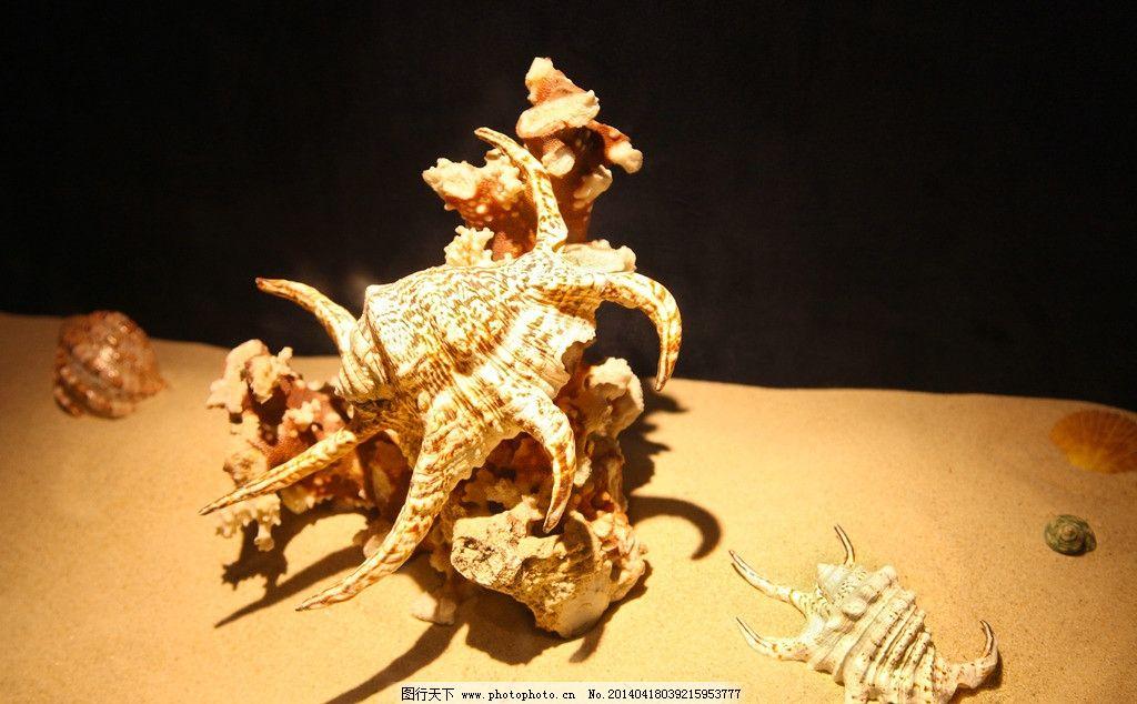 贝壳 标本 动物标本 艺术图案 美术 文化艺术 工艺品 绘画 手工制作
