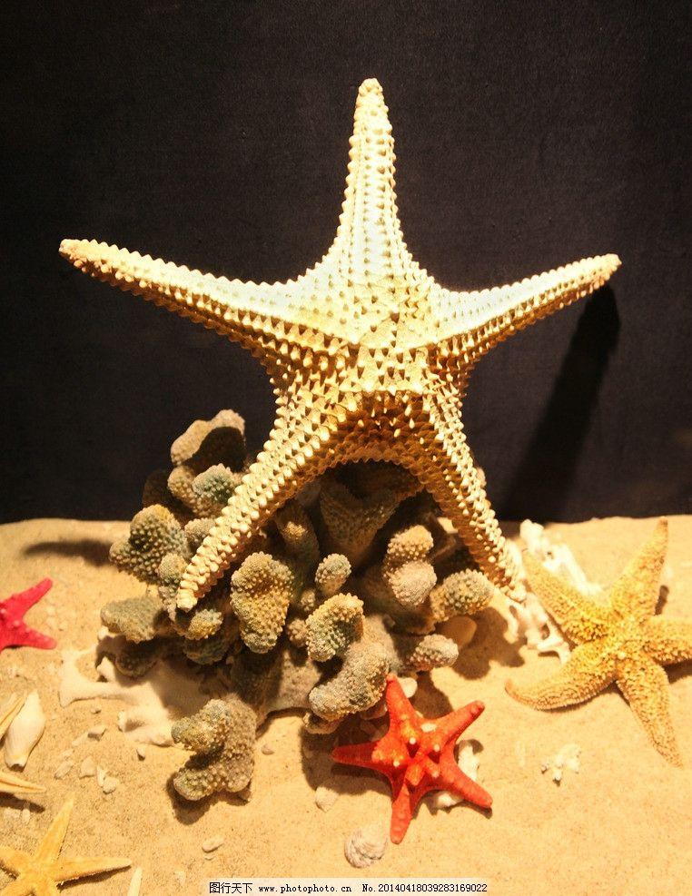 海星 工艺品 绘画 手工制作 标本 动物标本 贝壳 艺术图案 美术 文化