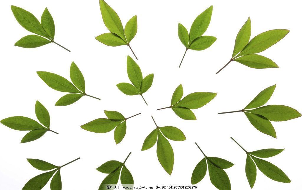 树叶 风景 水滴 环保 健康 叶子 树木树叶 生物世界 摄影 300dpi jpg