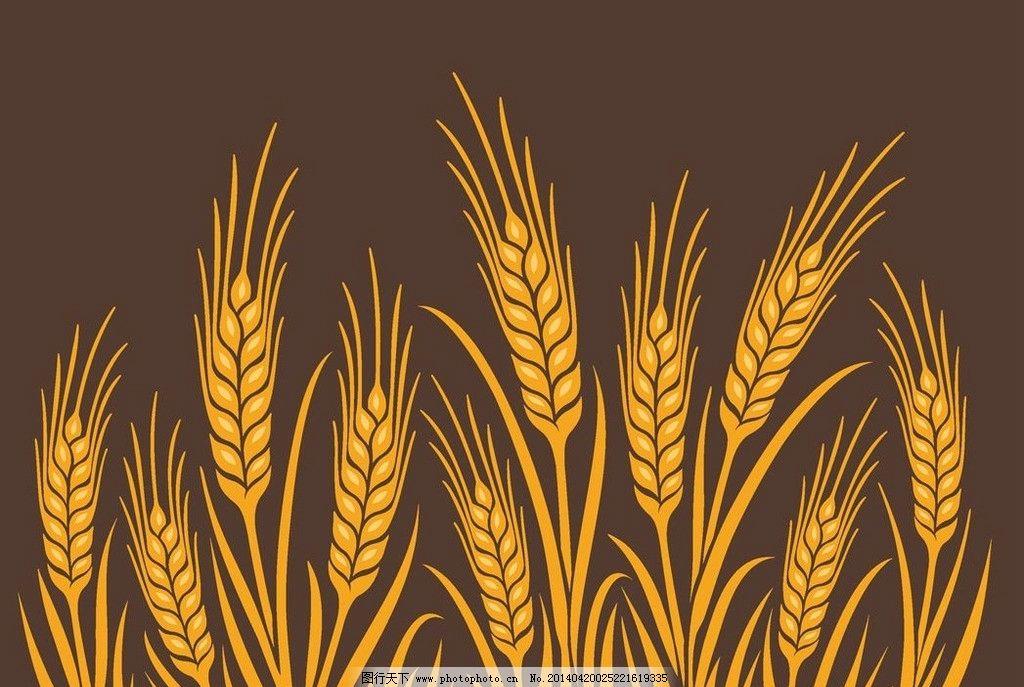 小麦粮食麦穗稻子图片