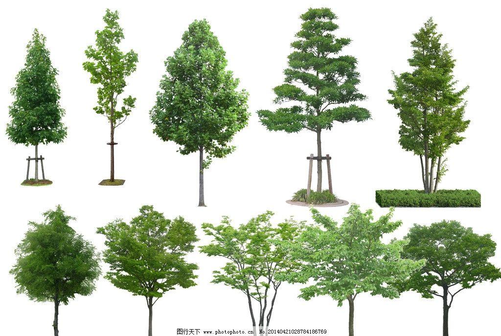 树景观手绘立面线稿