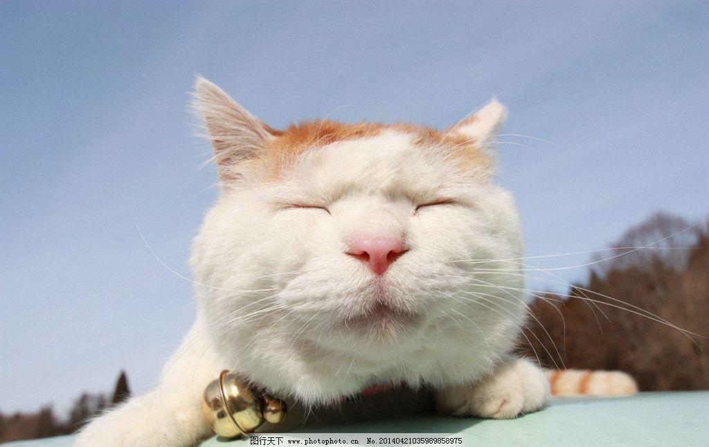 猫叔 猫 睡觉图片,懒觉 日本 日本猫叔 晒太阳 摄影