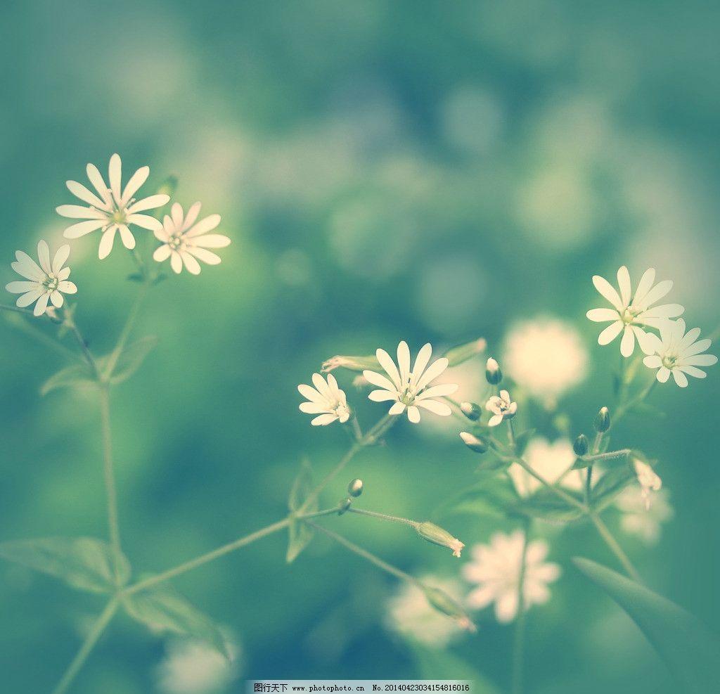 花朵花草背景图片图片