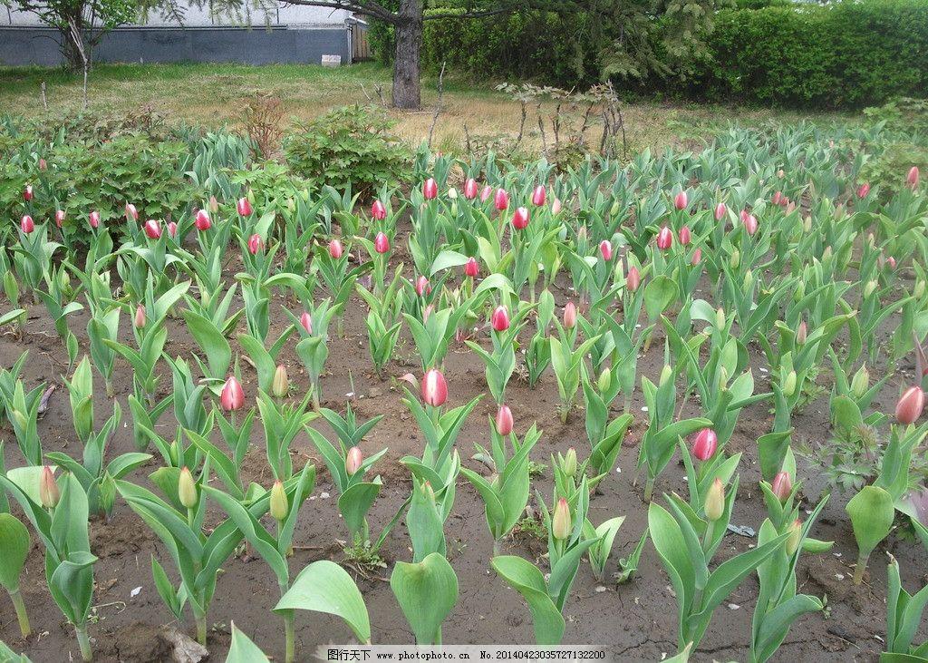 壁纸 成片种植 风景 花 植物 种植基地 桌面 1024_731