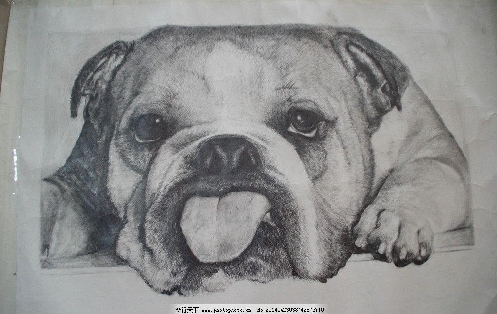 斗牛犬素描 素描 写实 黑白 铅笔画 动物 美术绘画 文化艺术 摄影 72
