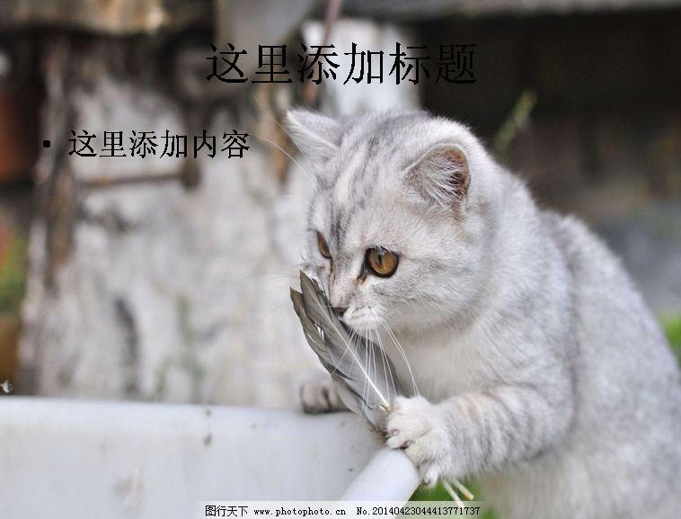 可爱猫咪卖萌(6) 免费下载 ppt 其他ppt模板
