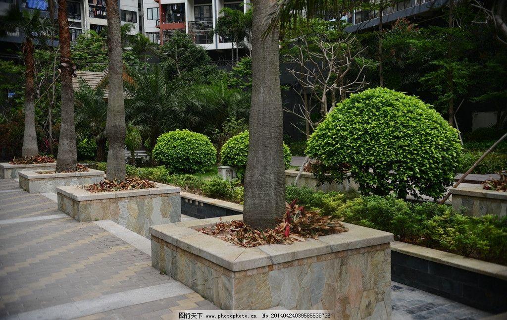 小区景观图片,小区绿化 园林 树 大树 建筑小区 植物