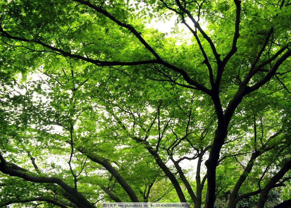 壁纸 风景 森林 桌面 1024
