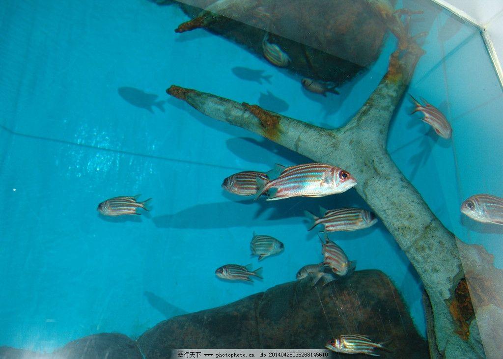 鱼海洋馆图片图片