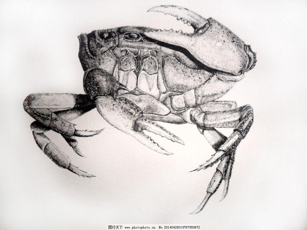 素描大闸蟹步骤图片