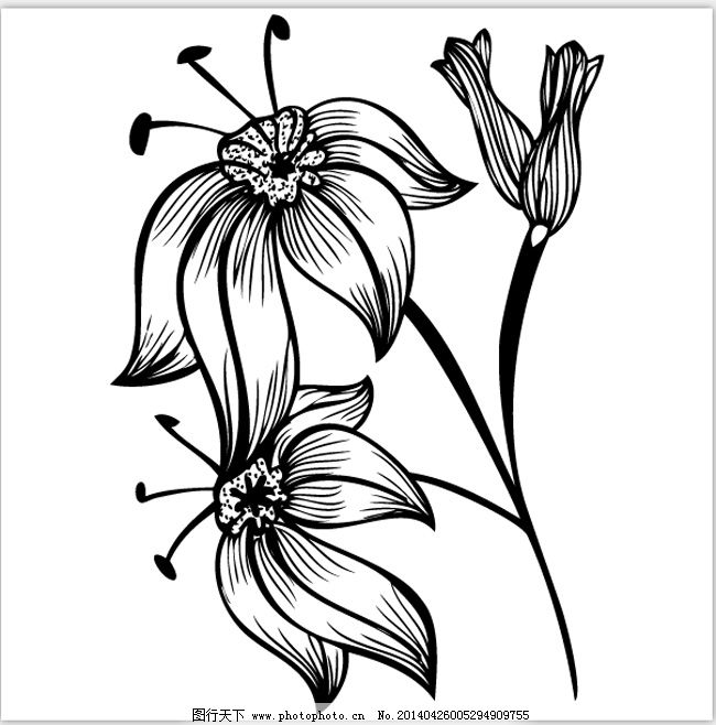 黑白 花朵 盛开 装饰 盛开 花朵 装饰 底纹 黑白 矢量图 花纹花边