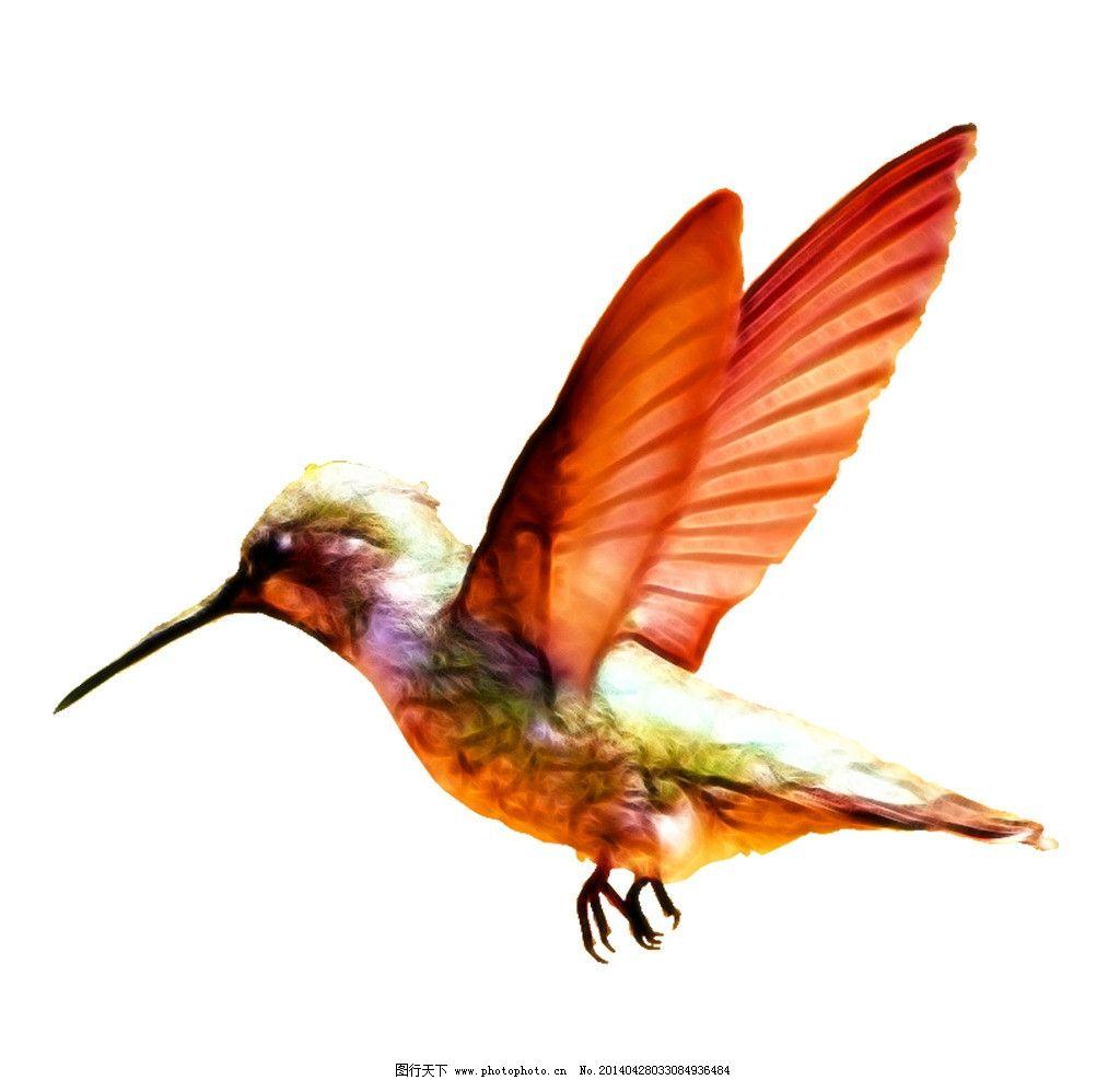 蜂鸟 水彩 水粉 手绘 数码 印花 源文件