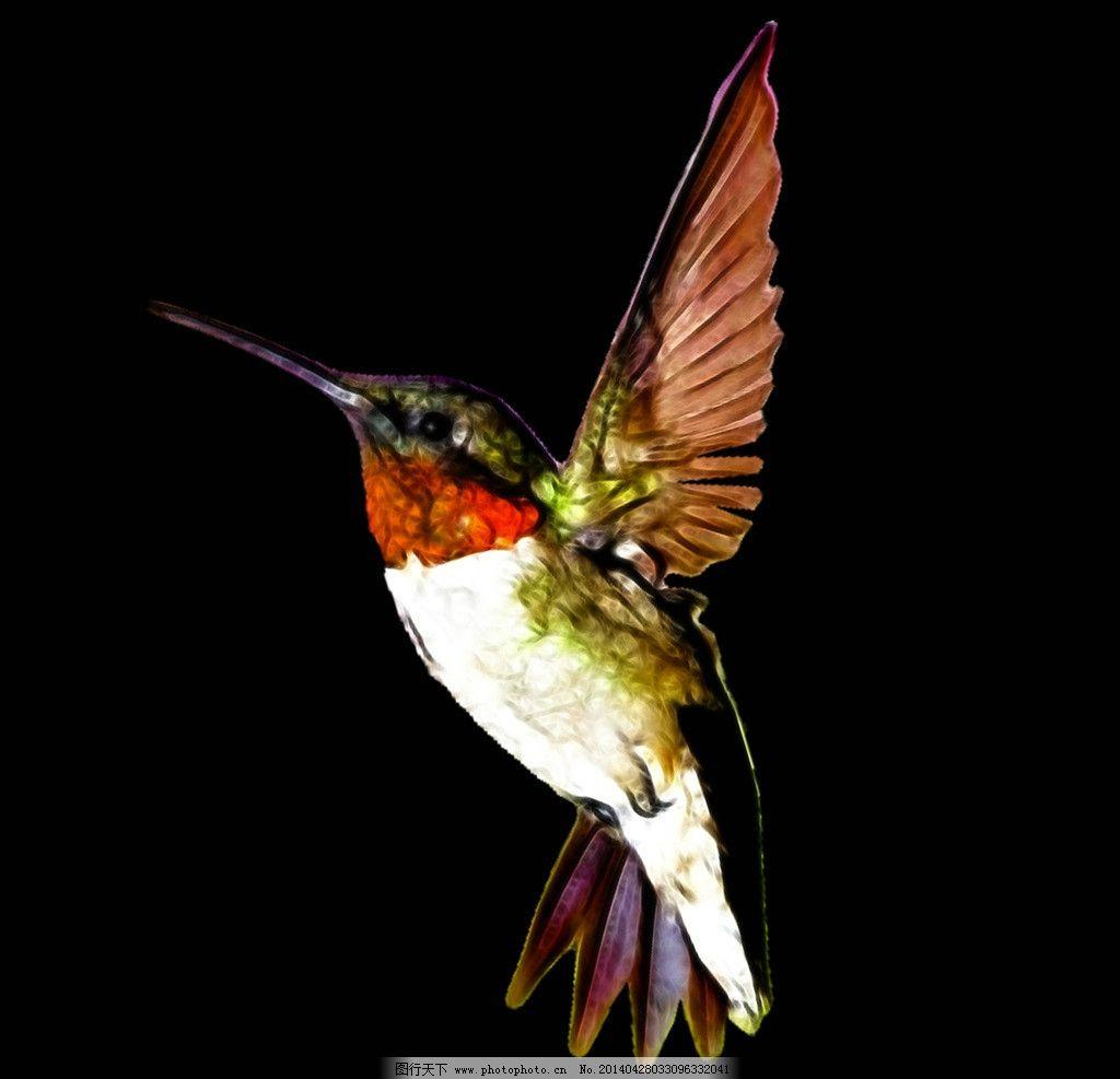 蜂鸟 水彩 水粉 手绘 数码 印花 鸟 psd分层素材 源文件 72dpi psd