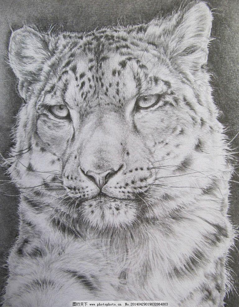 素描动物 动物 素描 雪豹 老虎 国画 绘画书法 文化艺术 设计 72dpi j