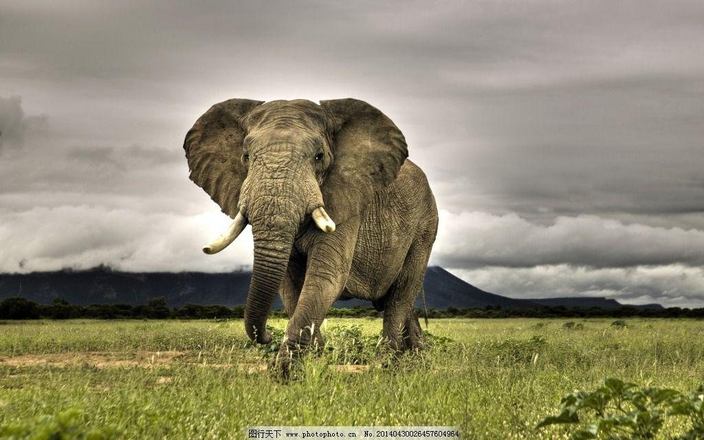 动物大象免费下载 保护动物 草原 大象 动物 风景 热带 野生动物 大象