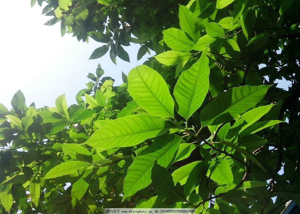 绿叶 绿树 蓝天 柳州 绿色 树木树叶 生物世界 摄影 72dpi jpg