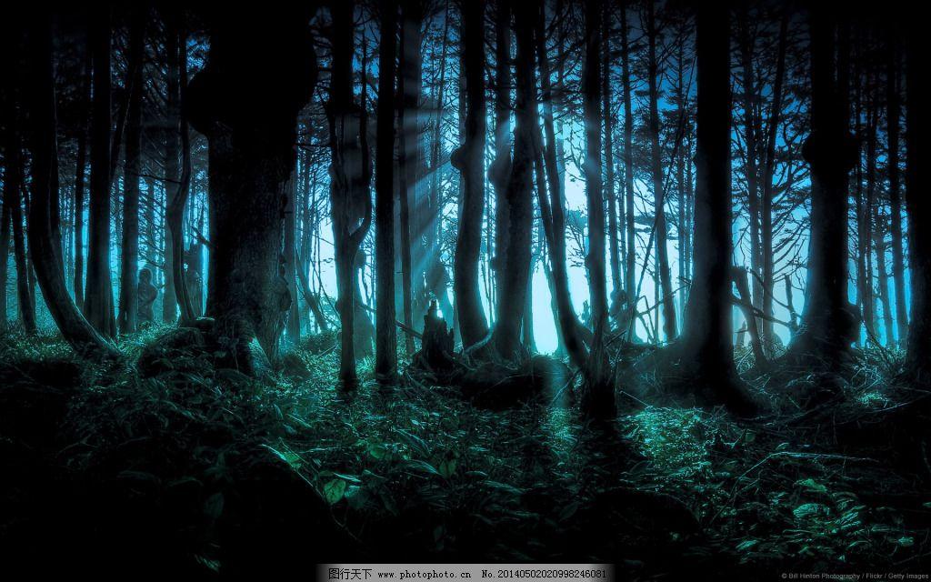 高清原始森林梦幻背景素材