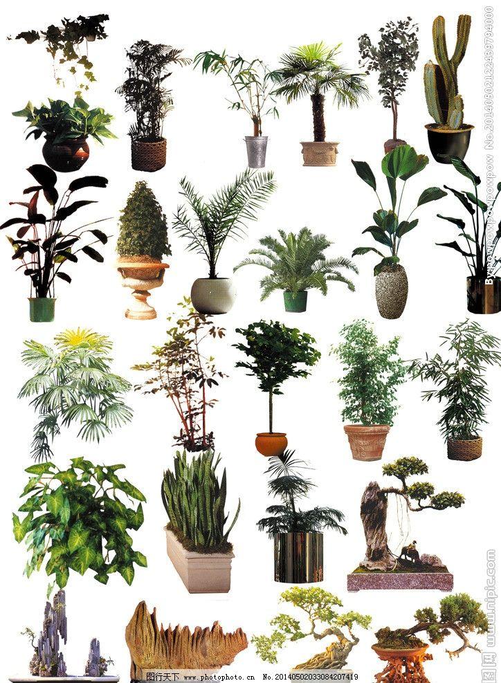 植物盆栽 室内设计图片