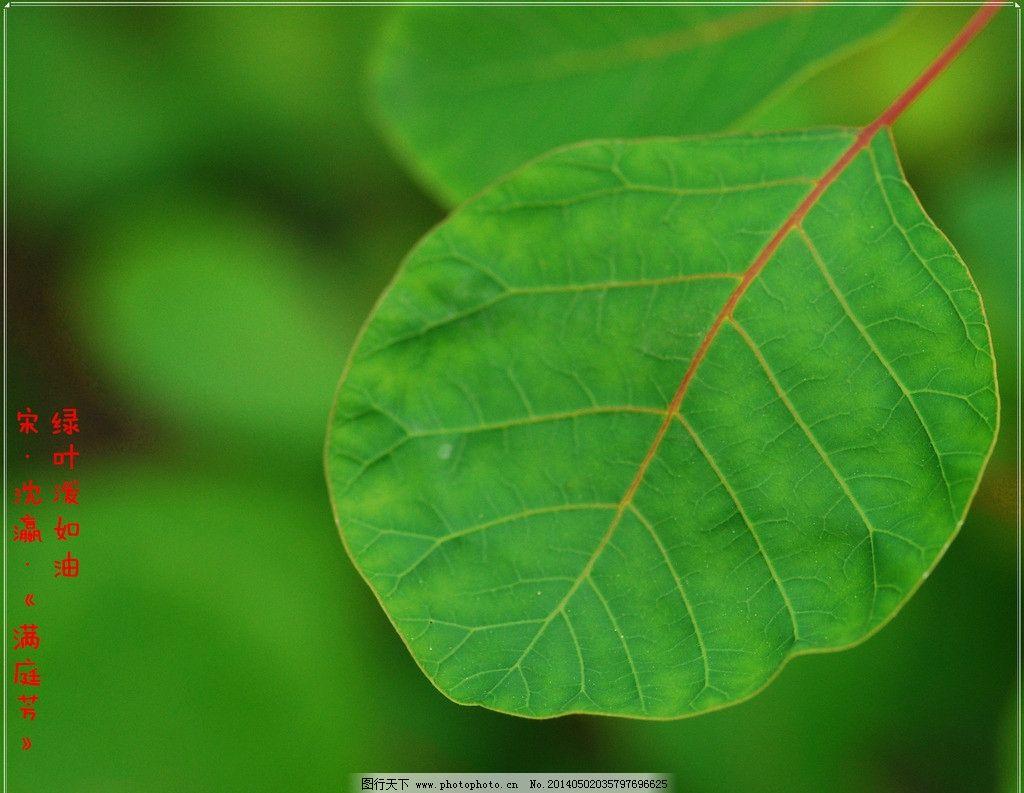 树叶 秋阳正午 户外摄影 植物世界 花花草草 花卉摄影 花与草