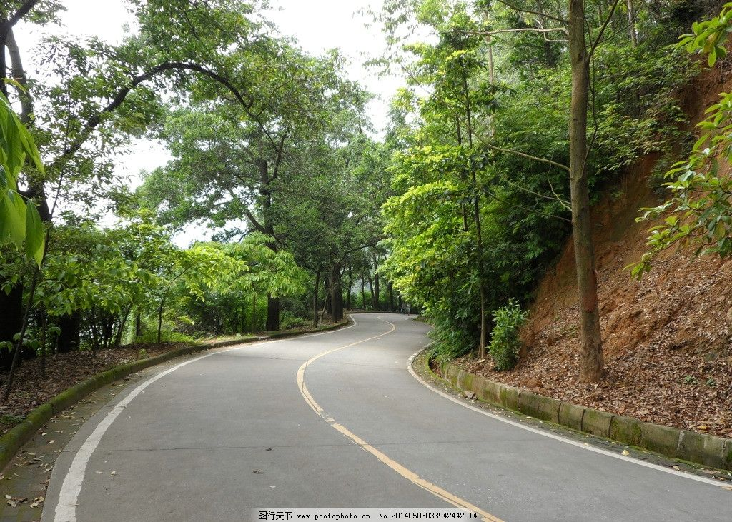 虎门石洞森林公园 虎门怀德 生态公园 公园道路 弯曲公路 国内旅游