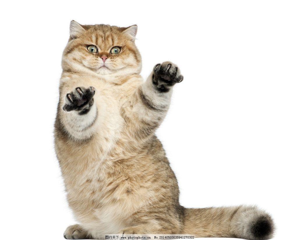 可爱宠物猫咪图片