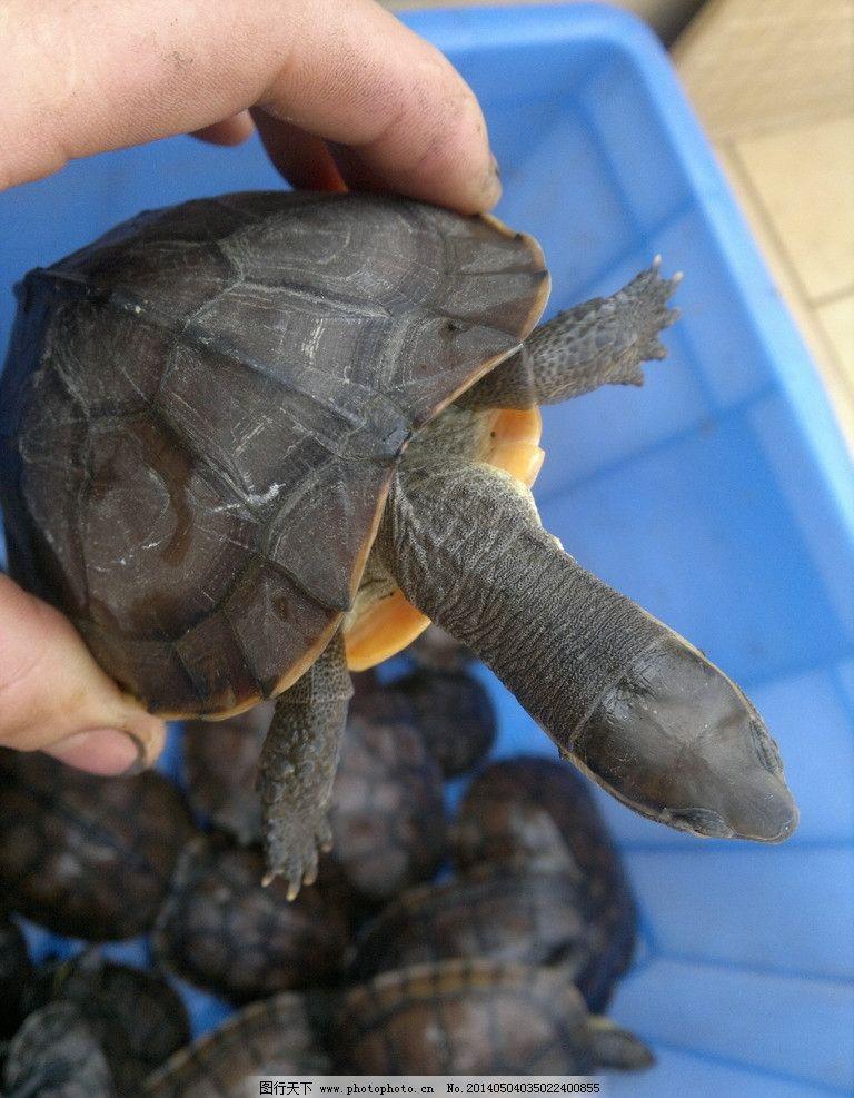 乌龟 龟 石金钱 龟池 养龟池 野生动物 生物世界 摄影 300dpi jpg
