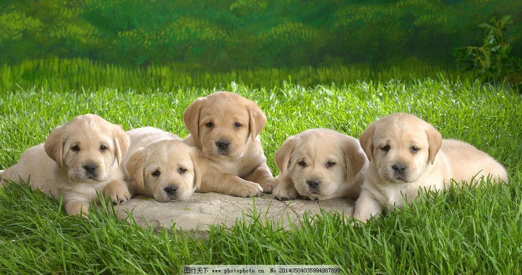 5只可爱小狗图片