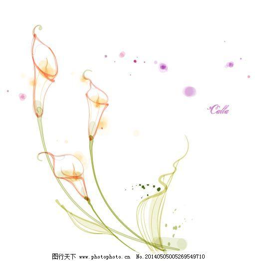 花朵 花卉 马蹄莲 手绘 素描 唯美 唯美 素描 手绘 花朵 花卉 马蹄莲