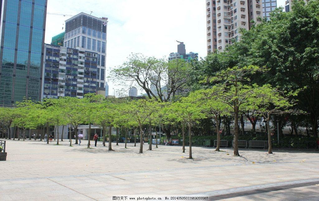 广场小树林 广场 小树林