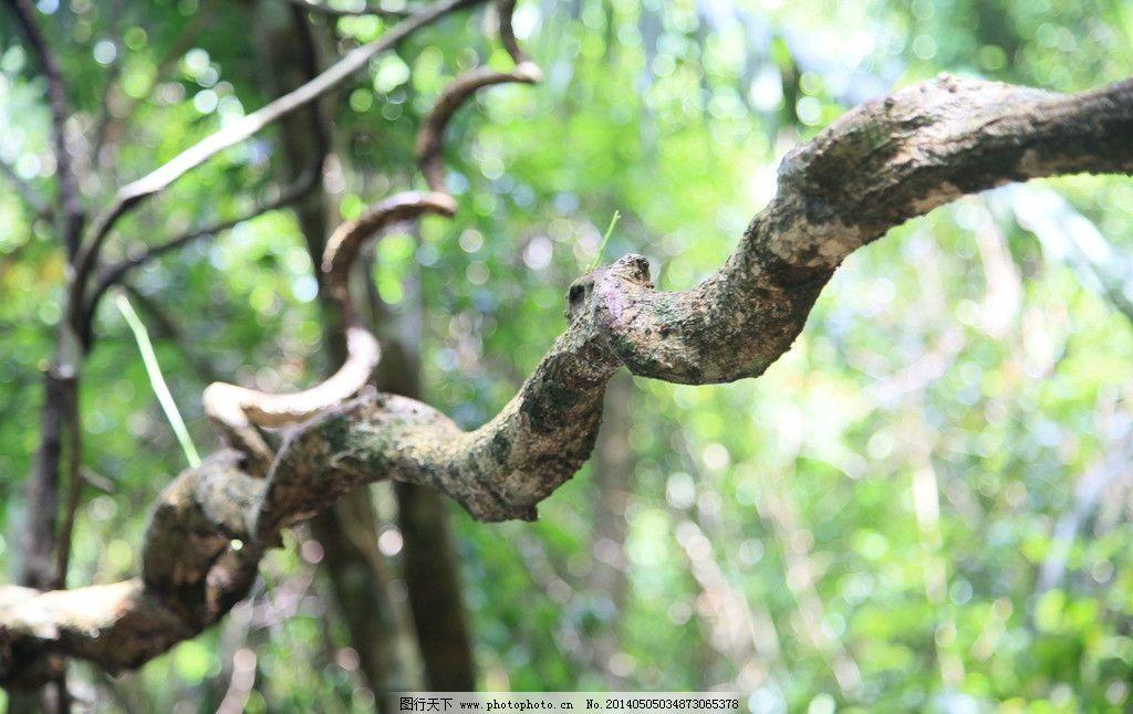 枯木逢春 海南 三亚 热带 雨林 风光 自然风景 自然景观 摄影 72dpi