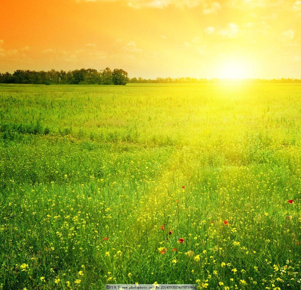 绿色公园美丽日出