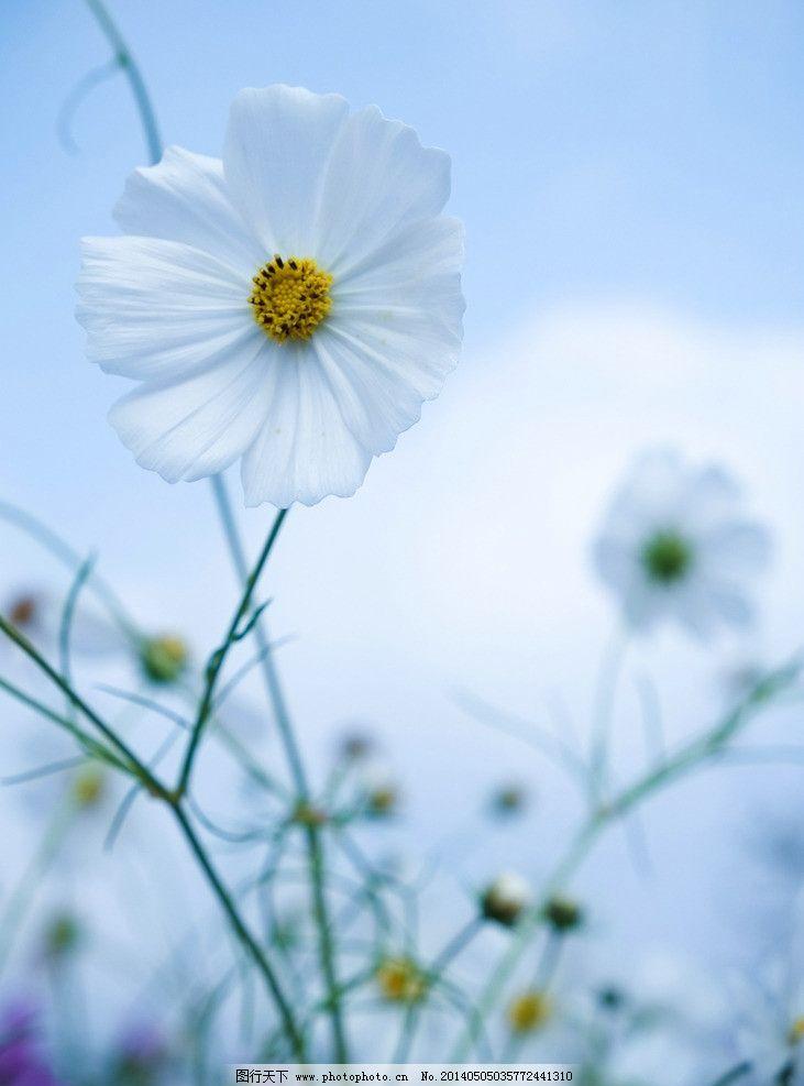 邹菊 花 枝叶 小亲新 素雅 紫色 小清新 特写 优雅 绿色 花朵图片