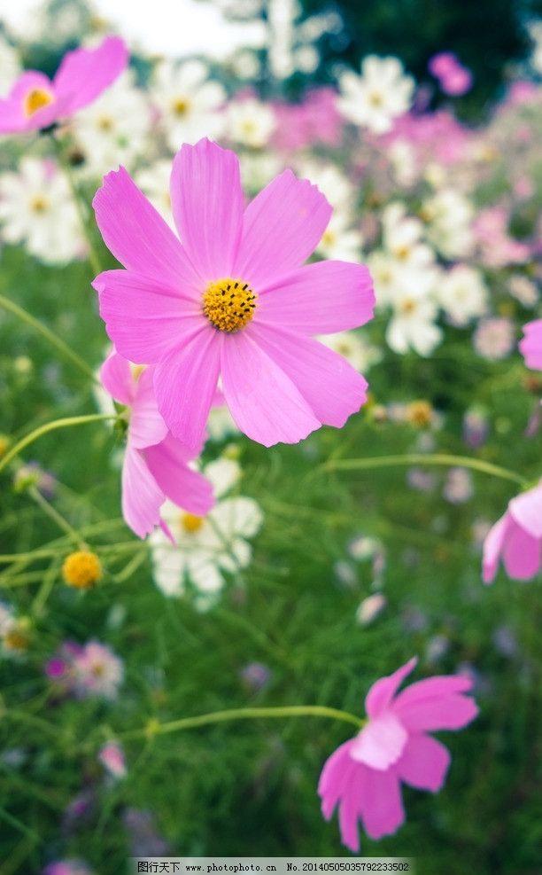 邹菊 花 枝叶 素雅 紫色 小清新 特写 优雅 绿色 花朵 花卉图片