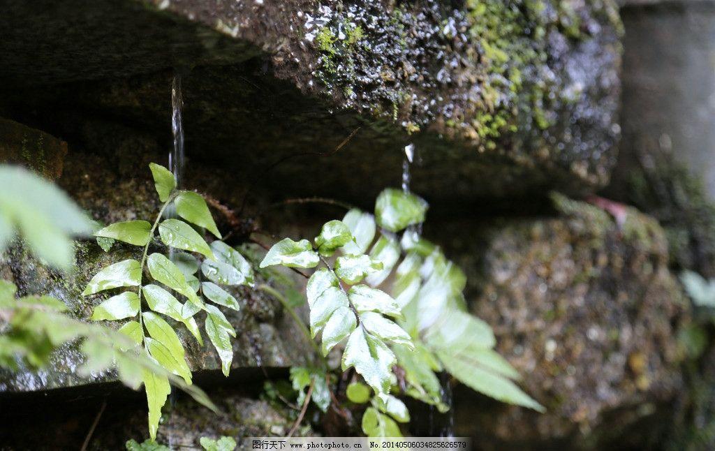 青石绿叶露珠禅意世界 禅意 绿色 静物 风景 植物 自然风景 自然景观
