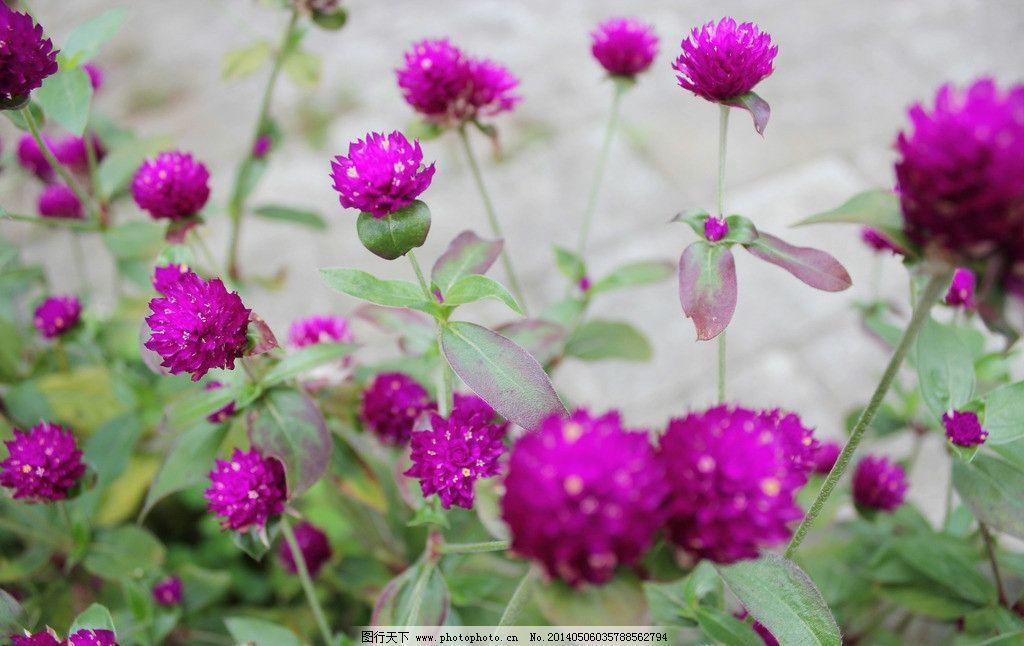 花朵植物桌面静态 绿色 风景 静物 花草 生物世界 摄影