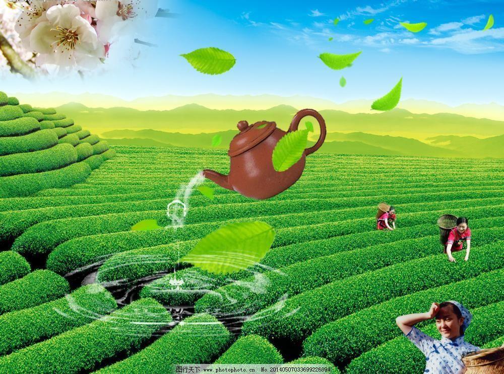 300dpi psd psd分层素材 波纹 采茶女 草地 茶壶 茶叶 茶叶模板下载图片