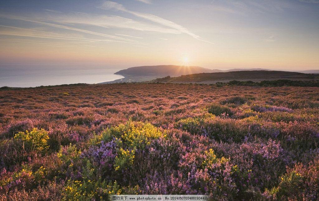 鲜花 鲜花图片素材下载 春天 旅游 风景 花草 生物世界 花海洋