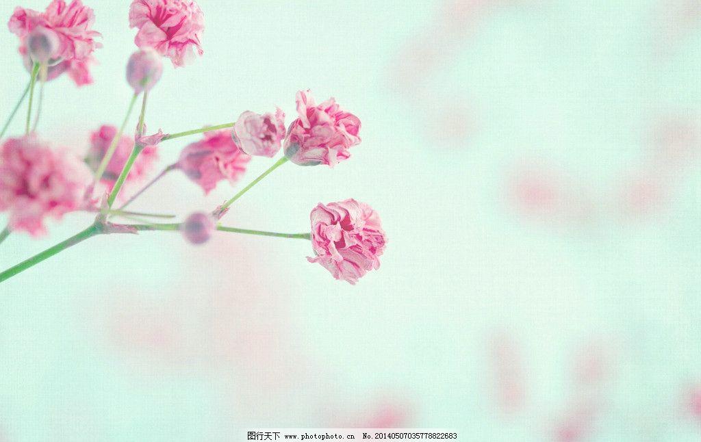豆子制作梅花粘贴画花朵步骤