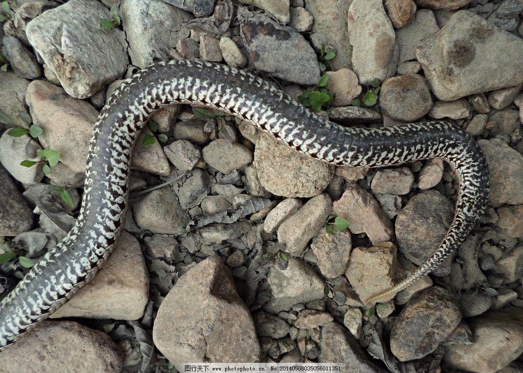 壁纸 动物 蛇 蜥 蜥蜴 1024_731