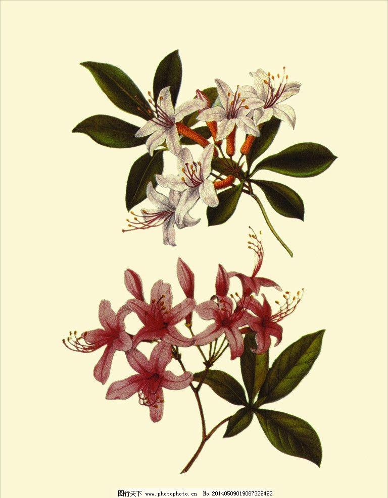 小栀子花 画芯 植物 手绘 花 装饰画 古代花朵 绘画书法 文化艺术