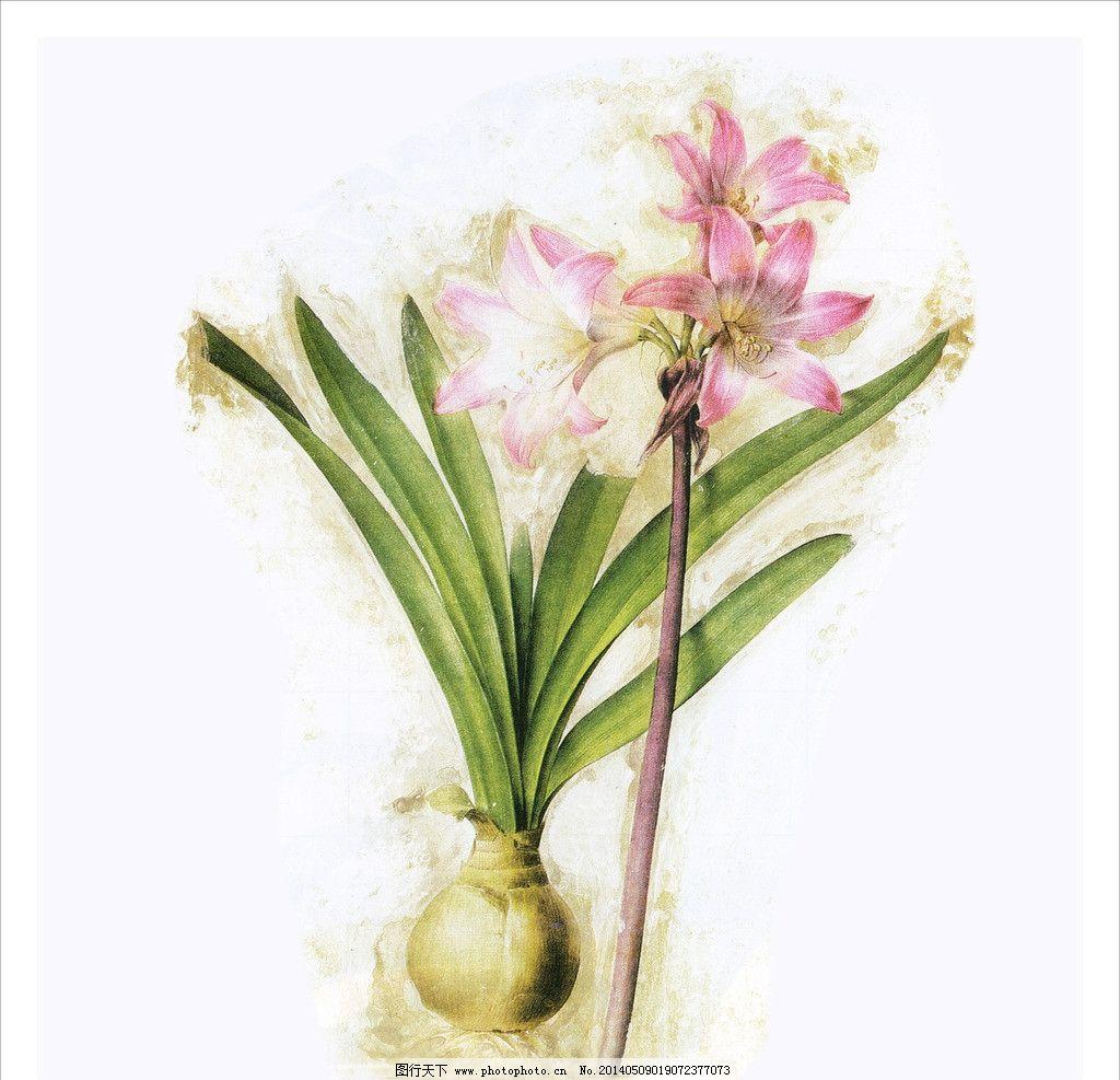 水仙花 画芯 植物 手绘
