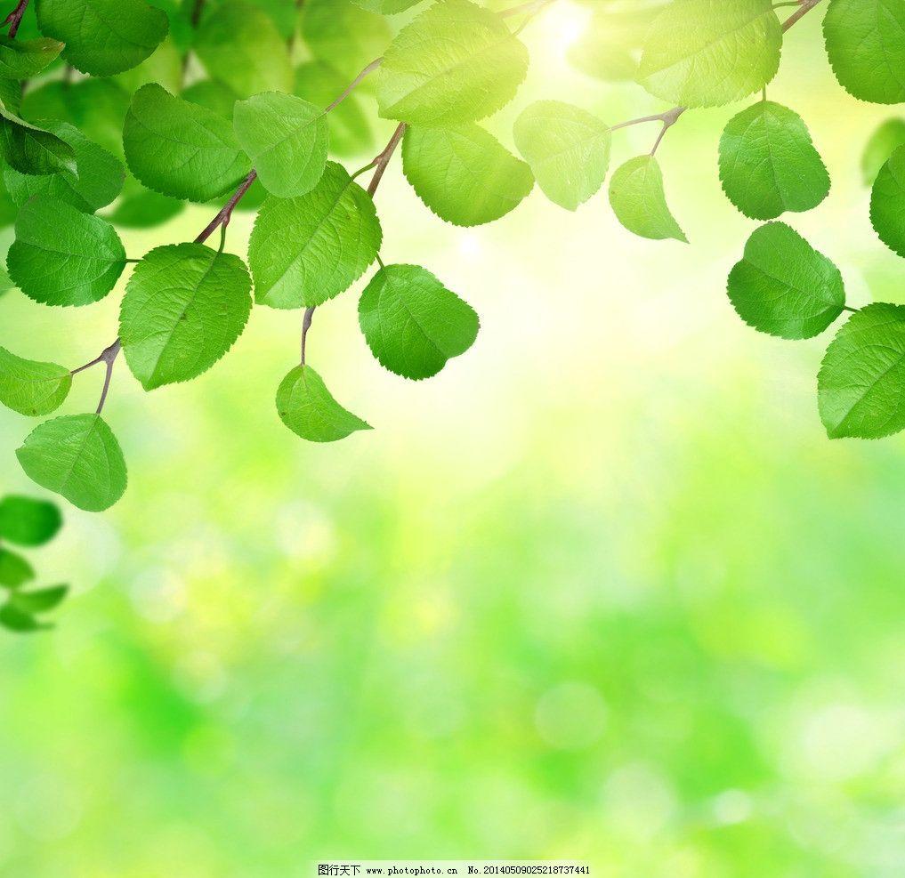绿叶叶子 绿叶 树叶 嫩叶 叶子 绿植 植物 小清新 梦幻色调 美景 树木