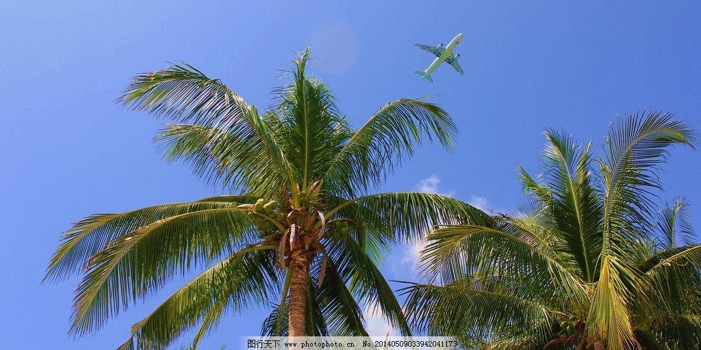 椰树风情 海南 三亚 蓝天白云 椰树 飞机 国内旅游 旅游摄影 摄影 72