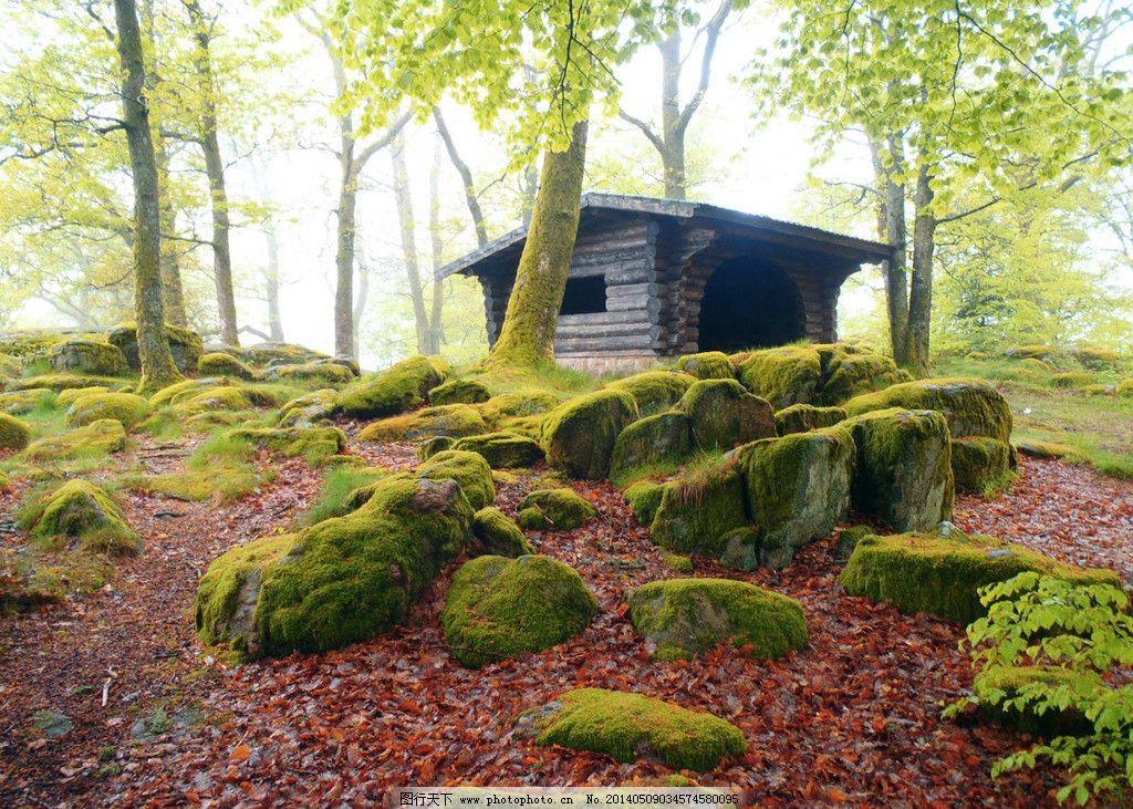 林中木屋 树 树林 树木 木屋 石头 青苔 田园风光 自然景观 摄影 200