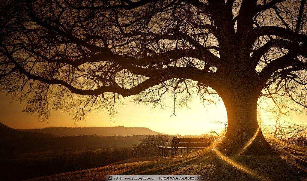 逆光大树 夕阳 秋天 背影 唯美 自然风景 自然景观 摄影