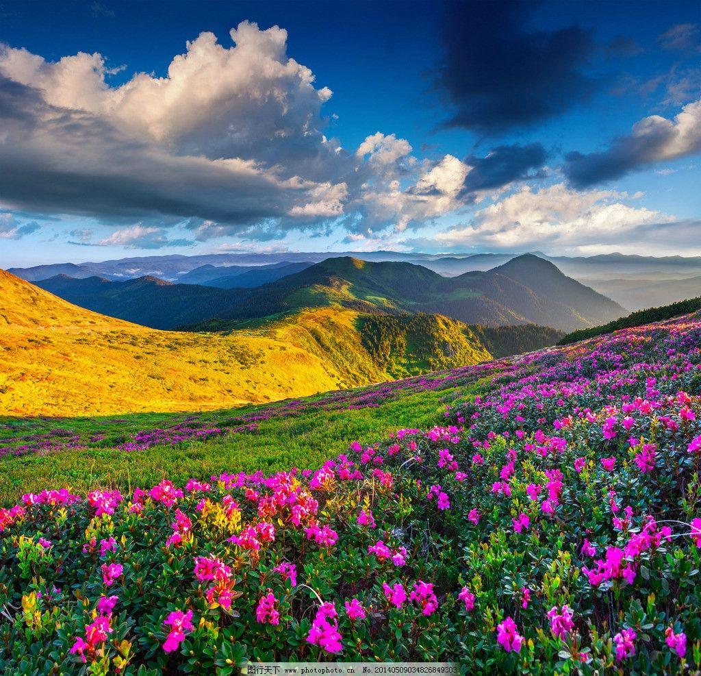 鲜花自然花草风景风光图片