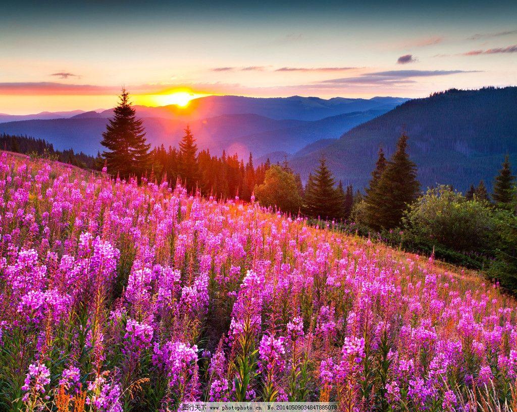 高山自然花草风景风光图片