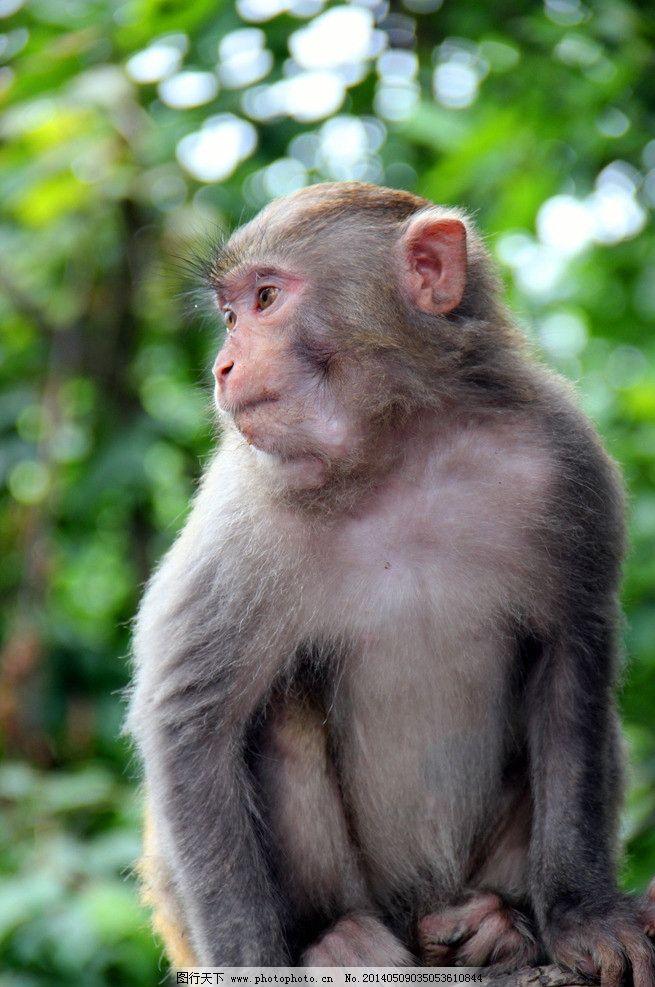 小猴 树中 单个 玩耍 灵性 野生动物 生物世界 摄影 72dpi jpg
